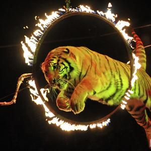 Цирки Екатеринбурга