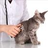 Ветеринарные клиники в Екатеринбурге
